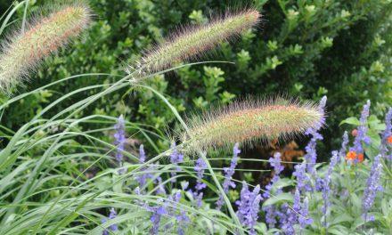 Vaše menopauza bylinky ocení aneb jaké bylinky na menopauzu