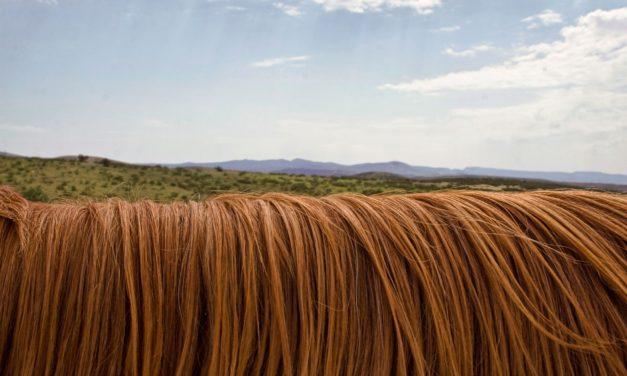 Padání vlasů u žen – příčiny a léčba